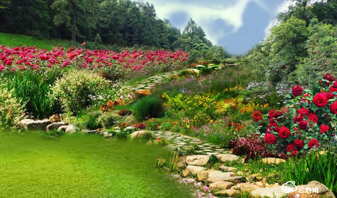 【綠博園建設進行時】綠博園月季花谷,給你彩色浪漫!