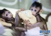 世界生命科学重大突破! 两只克隆猴在中国诞生