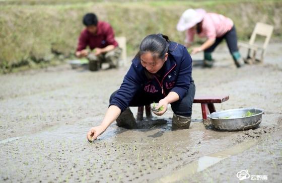 福泉:谷雨将至农事忙
