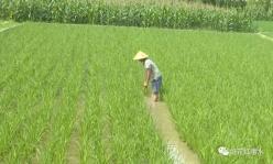 惠水羨塘:發展稻田養魚 全力助民增收