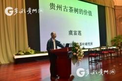 中國權威古茶樹研究專家虞富蓮:貴州是世界茶樹原產地中心