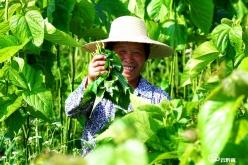 同一片田地 不同的豐收——荔波縣農村產業發展見聞