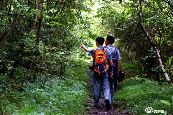 【強四力·走基層】走進荔波,與護林員一起穿越茂蘭原始叢林!