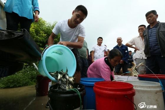 福泉陸坪:發展稻田養魚促進群眾增收