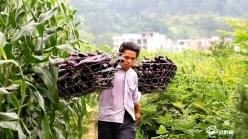 三都大河:時令蔬菜新鮮上市  供不應求