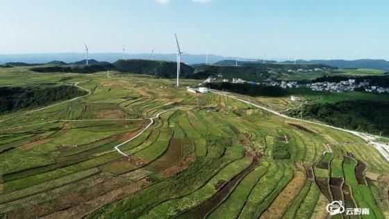 龍里:3000畝海花草助推鄉村振興