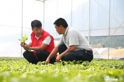 綠了產業  紅了心愿——記龍里縣灣灘河鎮蔬菜產業帶頭人解道矯