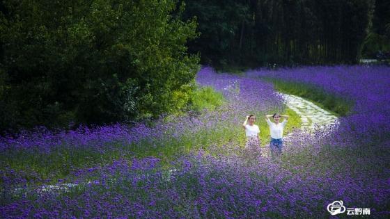 來長順,邂逅一場紫色的秋天