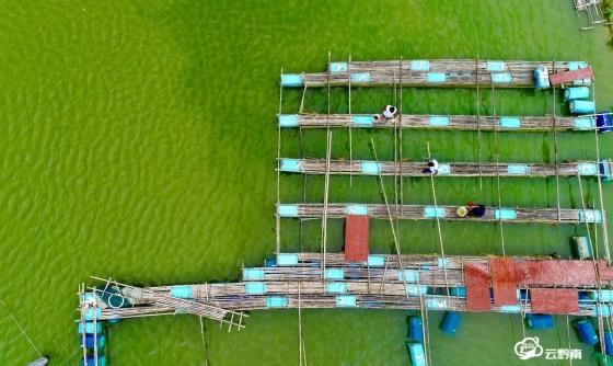 长顺县代化镇水产养殖基地让贫困户入股有分红