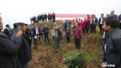 平塘通州:小小花椒苗  做成大產業