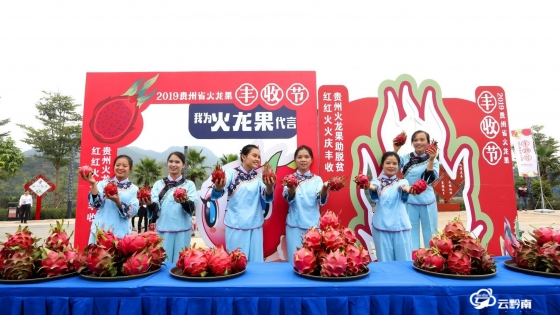 貴州火龍果豐收節   一場火紅的狂歡盛宴