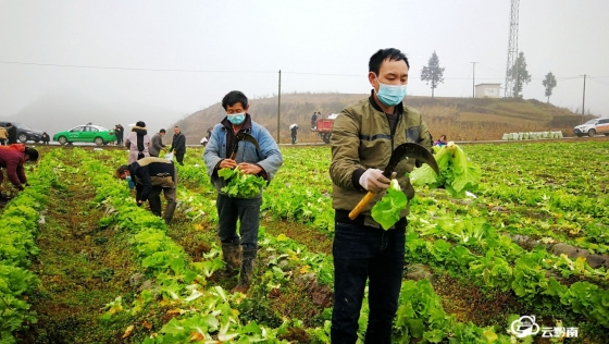 """福泉:群眾向一線抗疫人員捐贈10噸""""愛心""""蔬菜"""