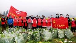【抗疫一线党旗红】平塘:蔬菜采摘成难题 党员干部来帮忙