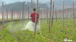 【把时间抢回来 把损失补回来】福泉凤山:春耕生产正进行 坝区产业谋划时