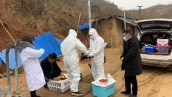 福泉市扎实开展禽流感监测工作保障禽业健康发展