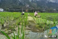 平塘六硐壩區:產業調整有成效  群眾發展干勁足