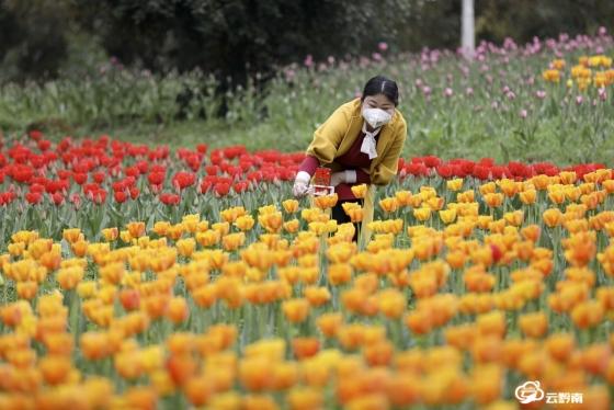 龍里縣龍架山國家森林公園:春來到  花滿園