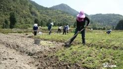 贵定县威远村:引进蔬菜种植企业 带领群众增收致富