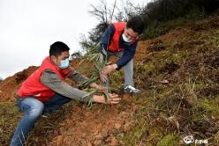 【把时间抢回来 把损失补回来】龙里洗马:打造百亩竹产业  绿化山坡富村民