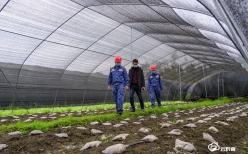 【把時間搶回來 把損失補回來】都勻供電局助力農業園健康平穩發展