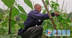【把时间抢回来 把损失补回来】罗甸罗悃:调减低效农作物  春耕备耕育苗忙