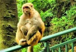 """网友怒了!""""主播用老鼠逗黔灵山猴子,搞直播!""""公园相关人士表态"""