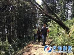 """罗甸逢亭:筑牢森林防火""""安全网""""  守护青山绿水好生态"""