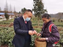 """""""天眼之城""""茶飘香——平塘农商银行助力茶产业提质增效小记"""
