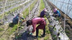 平塘通州:产业发展助群众家门口就业