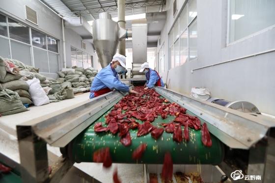 龍里:小辣椒成大產業