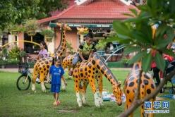 老挝社会生活日渐恢复