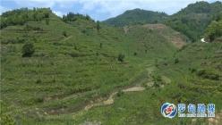 """罗甸县新光村:荒坡种上油茶树 群众有了""""绿色提款机"""""""