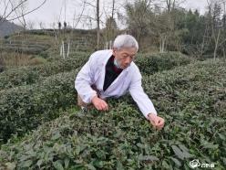那山 那人 那茶——都匀市大力推进茶旅融合发展助力脱贫攻坚纪实(中)
