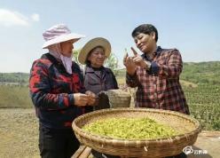 绿了青山 富了百姓——记贵州瓮安鑫产园茶业有限公司董事长黄红缨