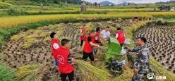 三都县检察院驻村工作队帮助农户抢收稻谷