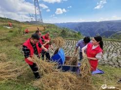 龙里县工商联:志愿服务进农家  助农抢收解民忧