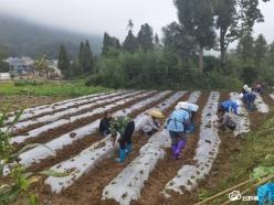 贵定:引进企业创业 带动农户增收