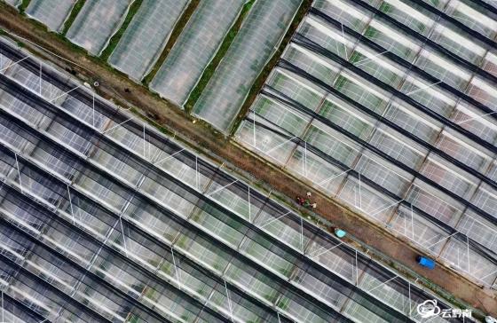 抓好秋冬种 播下新希望——黔南州全力抓好农业产业秋冬种工作掠影