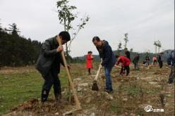 瓮安县中医院:绿水青山 植树为先
