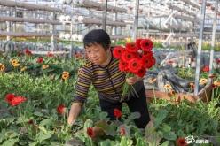 【新春走基层】惠水县好花红村:鲜花产业美了乡村富了农家