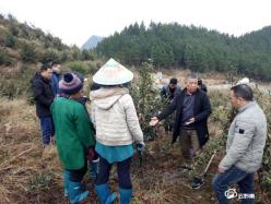 荔波:春回大地苏万物 科技培训益林农