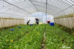 福泉:强化农田基础设施 着力提高耕地质量