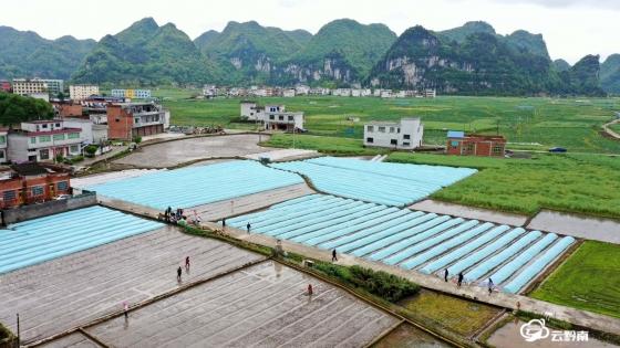 我州全力推进水稻高产栽培技术