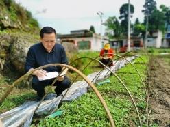 三都县开展辣椒品种展示试验推动产业上台阶