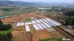 福泉市做特做优主导产业助推农业高质高效发展