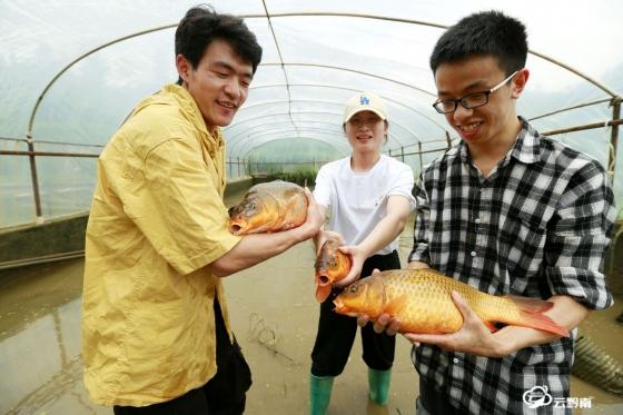 都匀:培育金背鲤鱼 助力乡村振兴