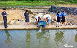 非法捕捞河鱼41条 增殖放流鱼苗4000尾
