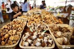 【走进乡村看小康】龙里县观音村:野生菌带来的巨变
