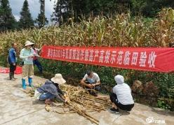 【走进乡村看小康】都匀:12万亩玉米喜获丰收