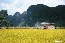 经州市专家组测产验收 都匀凯口水稻高产示范田超额实现示范目标